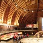museo jurasico asturias 05